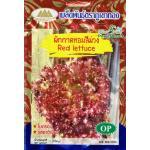 OP55 ผักกาดหอมสีม่วง Red Lettuce