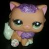 แมวเปอเซีย สีส้ม #2275 แต่งวิ๊งค์