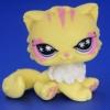 แมวเปอเซีย สีเหลือง #723A
