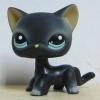 แมว Siamese cat #994 (หายากมาก)