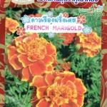 FW11 ดาวเรืองฝรั่งเศส French Marigold