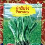 OP36 ผักชีฝรั่ง Parsley