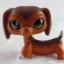 สุนัขดัชชุนด์ สีน้ำตาล #675 thumbnail 1