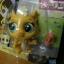 Gerry Goldman cat สีเหลือง (แพ็ค) thumbnail 2