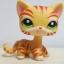 แมว สีส้มลายเสือ #1451 (หายาก) thumbnail 1
