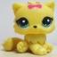 แมวเปอเซียสีเหลือง โบสีชมพู #778 (หายาก) thumbnail 1