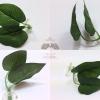 สินค้านำเข้าจากประเทศญี่ปุ่นใบไม้ผลิตจากผ้าอย่างดี - Leaf Natural Aquarium For Bettafish Premium Quality Grade