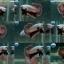 """(ขายแล้วครับ)""""คัดเกรด""""ปลากัดครีบสั้น-Halfmoon Plakats Red Dragon thumbnail 1"""