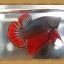 *ปลาเกรดพิเศษ* ปลากัดครีบสั้น - Halfmoon Plakats thumbnail 1