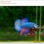 คัดเกรดปลากัดครีบสั้น-Halfmoon Plakat Fancy Dragon Green Red Pink thumbnail 2
