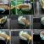 """(ขายแล้วครับ)""""คัดเกรด""""ปลากัดครีบสั้น-Halfmoon Plakats Fancy Net Balck เกรดพ่อพันธุ์ thumbnail 2"""