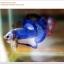 คัดเกรดปลากัดครีบสั้น-Halfmoon Plakat Blue Mustrad thumbnail 5