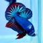 ปลากัดคัดเกรดครีบสั้น - Halfmoon Plakad Fancy Dragon Premium Quality Grade AAA+ thumbnail 1