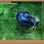 คัดเกรดปลากัดครีบสั้น- Halfmoon Plakat Fancy Blue Dragon thumbnail 3