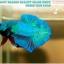 """(ขายแล้วครับ)""""คัดเกรด""""ปลากัดครีบสั้น-Halfmoon Plakats Fancy Green Nice Tails Nice Form thumbnail 7"""