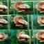 """(ขายแล้วครับ)""""คัดเกรด""""ปลากัดครีบสั้น-Halfmoon Plakats Red Gold Dragon thumbnail 2"""