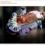 คัดเกรดปลากัดครีบสั้น-Halfmoon Plakat Koi Ice Fancy thumbnail 4