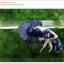 คัดเกรดปลากัดครีบสั้น-Halfmoon Plakat Blue Dragon thumbnail 2