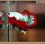 ปลากัดครีบสั้นหางพระจันทร์ครึ่งดวง - Halfmoon Plakat Fancy Dragon thumbnail 1