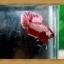 (ขายแล้วครับ)ปลากัดครีบสั้น-Halfmoon Plakats thumbnail 3