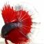"""""""คัดเกรดประกวด""""ปลากัดครีบยาว-Halfmoon Fancy Red Butterfly Premium Quality Grade AAA+ thumbnail 9"""