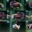 """(ขายแล้วครับ)""""คัดเกรด""""ปลากัดครีบสั้นหูช้าง-Halfmoon Plakats Big Ear Lavender thumbnail 1"""