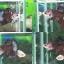 """(ขายแล้วครับ)""""คัดเกรด""""ปลากัดครีบสั้น-Halfmoon Plakats Super Fancy thumbnail 2"""