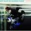 """(จองประเทศมาเลเซีย)""""คัดเกรด""""ปลากัดครีบสั้น-Halfmoon Plakats Black Koi thumbnail 7"""
