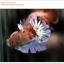 คัดเกรดปลากัดครีบสั้น-Halfmoon Plakat Koi Ice Fancy thumbnail 7