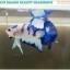 """(ขายแล้วครับ)""""คัดเกรด""""ปลากัดครีบสั้น-Halfmoon Plakats Blue Dragon thumbnail 4"""