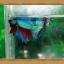 ปลากัดครีบยาว-Fancy Halfmoon thumbnail 4