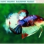 """(ขายแล้วครับ)""""คัดเกรดประกวด""""ปลากัดครีบสั้น-Halfmoon Plakats Fancy Dragon Koi Quality Grade thumbnail 9"""