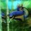 """(ขายแล้วครับ)""""คัดเกรด""""ปลากัดครีบสั้น-Halfmoon Plakats Fancy Super Grade thumbnail 5"""
