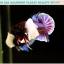 """(ขายแล้วครับ)""""คัดเกรดประกวด""""ปลากัดครีบสั้นหูช้าง-Halfmoon Plakats Big Ear Lavender Quality Grade thumbnail 8"""