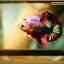ปลากัดครีบสั้น-Halfmoon Plakat Fancy Dragon thumbnail 2