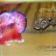 คัดเกรดปลากัดครีบสั้น-Halfmoon Plakat Fancy Pink Man Grade AAA+ thumbnail 2