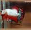ปลากัดครีบสั้นสีแฟนซีดราก้อน - Halfmoon Plakat Fancy Dragon thumbnail 1