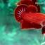 (ขายแล้วครับ)ปลากัดครีบสั้น - Halfmoon Plakats SUPER RED thumbnail 5