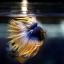 เพศผู้ปลากัดครีบยาว หางมงกุฏ ลายธงชาติ - Male CrownTails Premium Quality Grade thumbnail 4