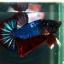 """(ขายแล้วครับ)""""คัดเกรด""""ปลากัดครีบสั้น-Halfmoon Plakats Super Fancy Ghost Devil Grade A thumbnail 10"""