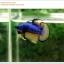 คัดเกรดปลากัดครีบสั้น-Halfmoon Plakat Mustrad Quality Grade thumbnail 9