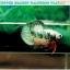 (ขายแล้วครับ)ปลากัดครีบสั้น-Halfmoon Plakat Fancy Copper Good Grade thumbnail 3