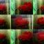 """(ขายแล้วครับ)""""คัดเกรด""""ปลากัดครีบสั้น-Halfmoon Plakats Super Red thumbnail 2"""