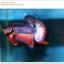 คัดเกรดปลากัดครีบสั้น-Halfmoon Plakat Lavender Fancy thumbnail 2