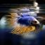 เพศผู้ปลากัดครีบยาว หางมงกุฏ ลายธงชาติ - Male CrownTails Premium Quality Grade thumbnail 6