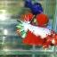 ปลากัดคัดเกรดครีบสั้น - Halfmoon Plakad Fancy Dragon Quality Grade thumbnail 2
