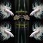 คัดเกรดปลากัดครีบยาวหางมงกุฎ - CrownTails White Quality Grade thumbnail 3