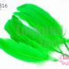 ขนนก(ก้าน) สีเขียว (5 ชิ้น)