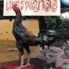 เจ้าสินเจริญทรัพย์ 134 พม่าหัวล่างพิเศษ