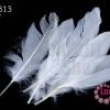 ขนนก(ก้าน) สีขาว (5 ชิ้น)
